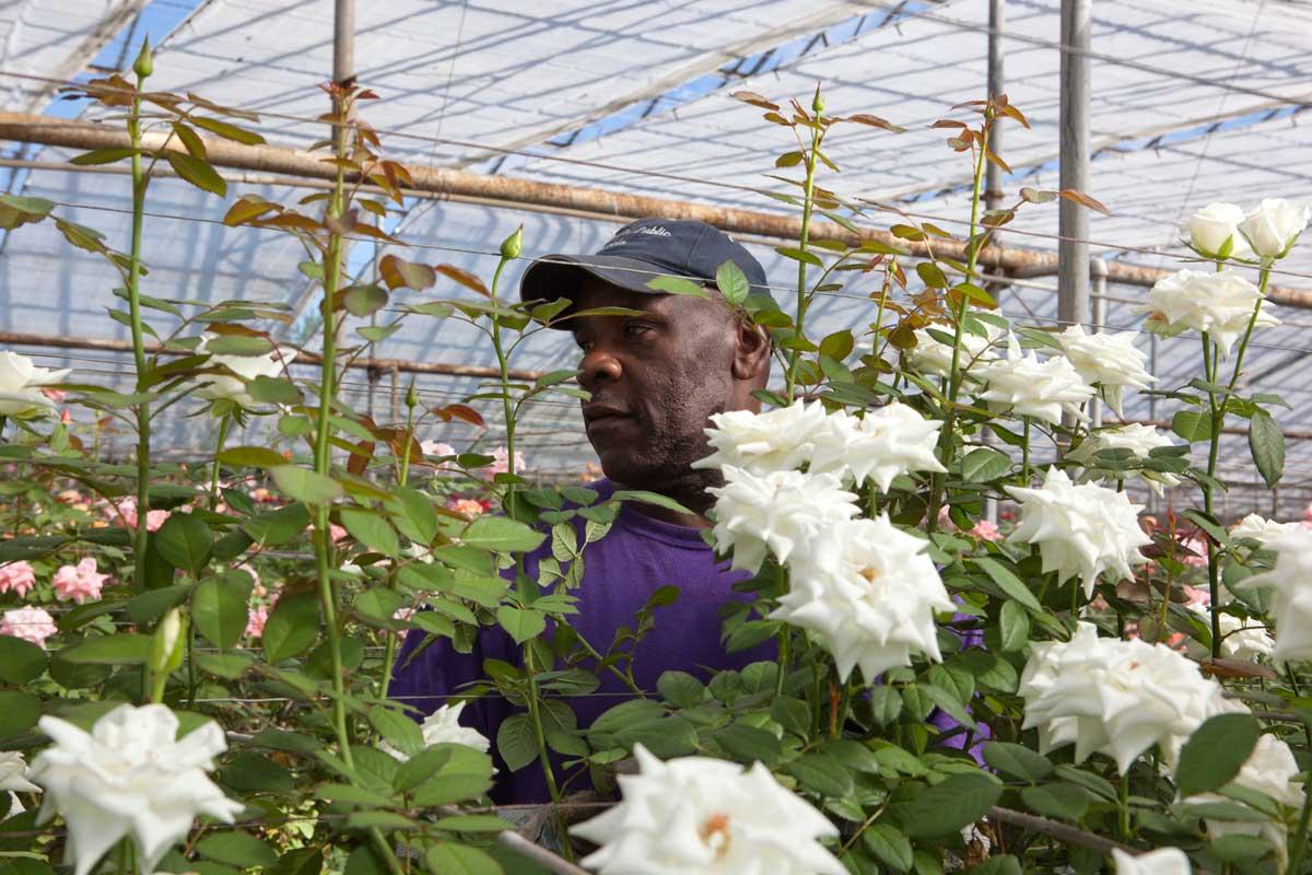rutcliff carter roses for autism