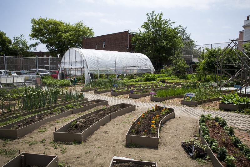 rsz_201506_cavan_garden_216_hires_raised_beds_growing_sunlight_hoophouse