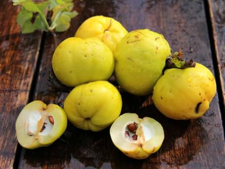 apple-cousins-quince