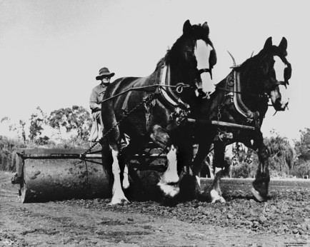 752px-StateLibQld_2_102264_Draught_horses_working_in_the_fields
