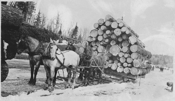 800px-Horses_pulling_sledge_loaded_with_logs_-_NARA_-_285199