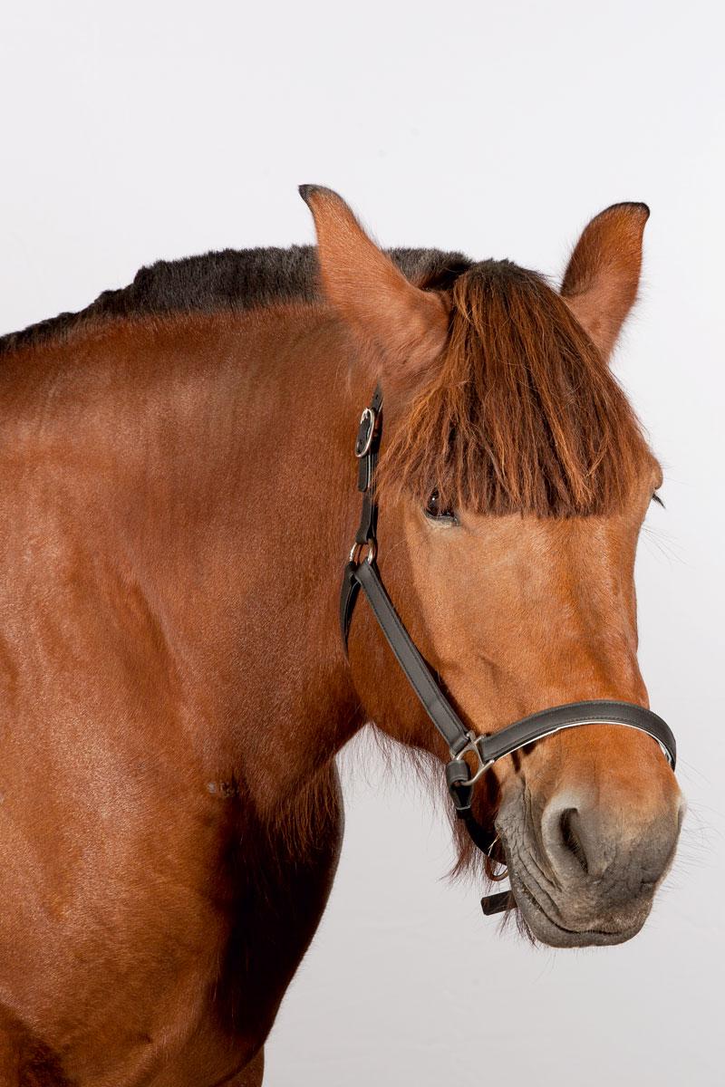 http://modernfarmer.com/wp-content/uploads/2015/12/draft-horses-brabant.jpg