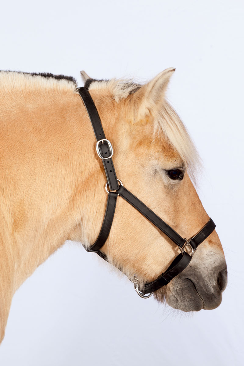 http://modernfarmer.com/wp-content/uploads/2015/12/draft-horses-fjord.jpg