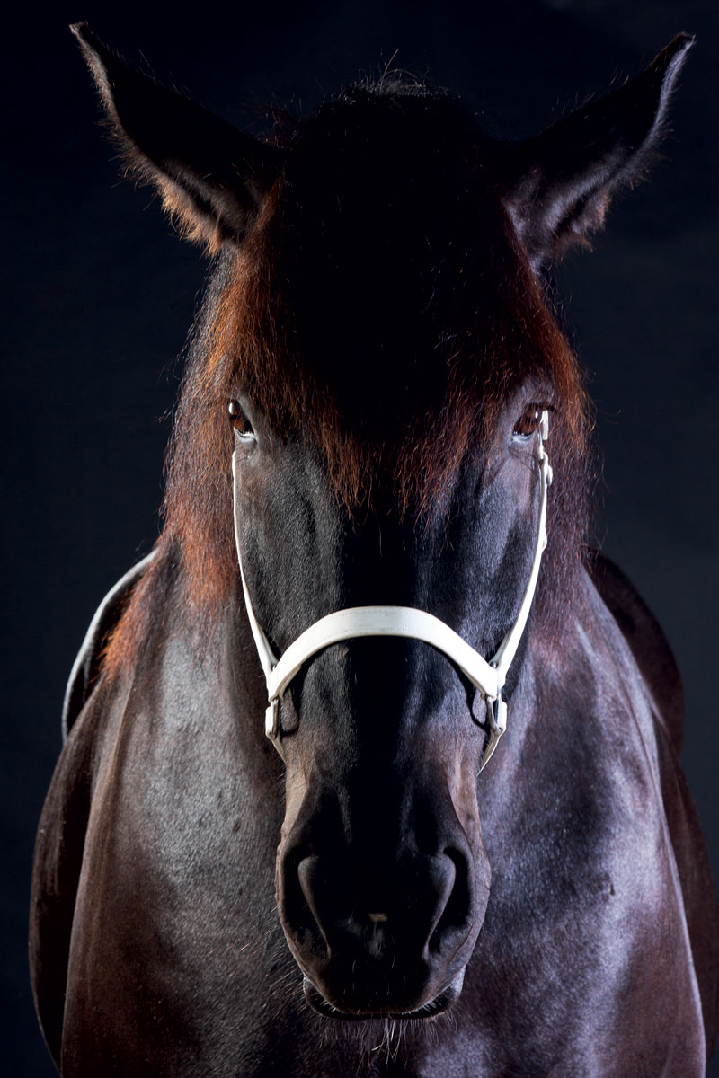 Harness The Power Of Draft Horses Modern Farmer