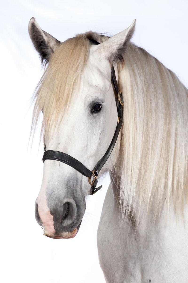 http://modernfarmer.com/wp-content/uploads/2015/12/draft-horses-shire.jpg