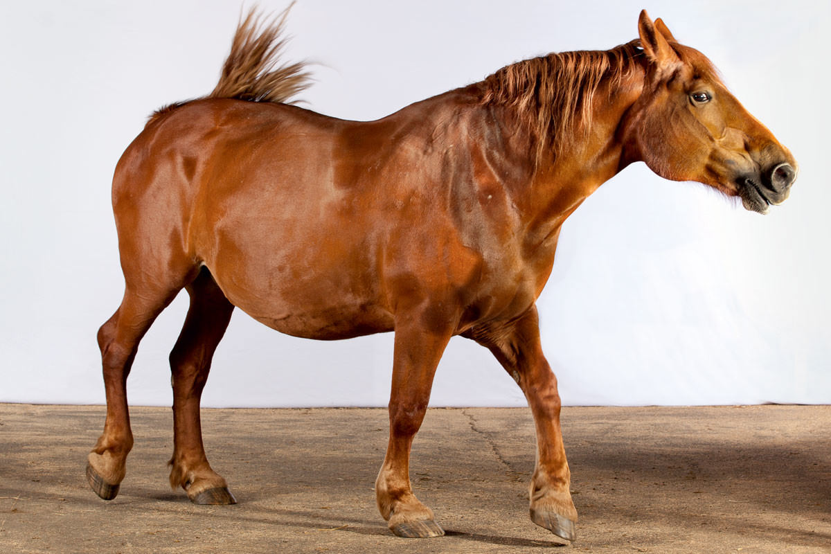 Harness the Power of Draft Horses - Modern Farmer
