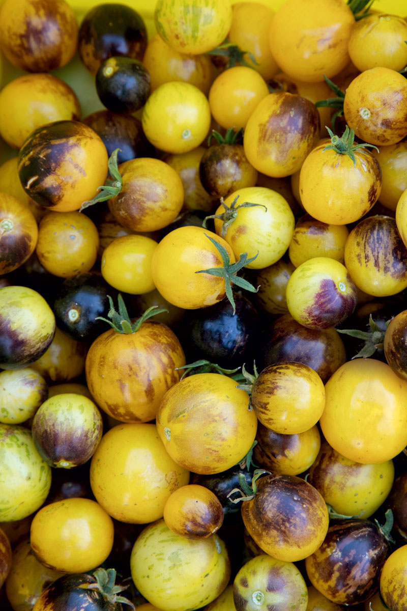 http://modernfarmer.com/wp-content/uploads/2015/12/seed-matters-tomatoes-1.jpg