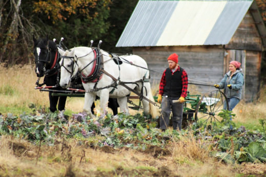 A student and draft horse assist in logging from the campus woodlot. Beana Bern for Sterling College, Flickr
