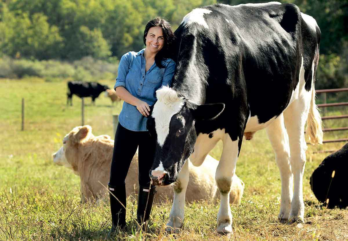 tracey stewart and cow
