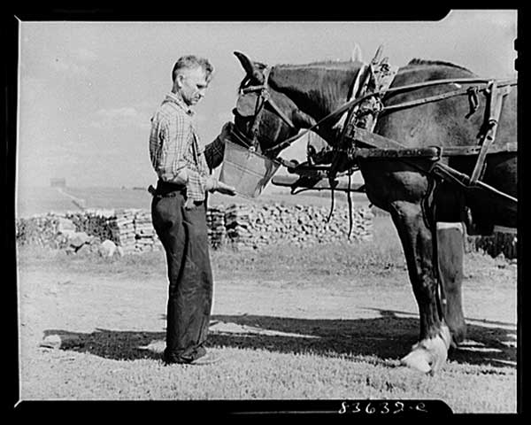 watering-horse