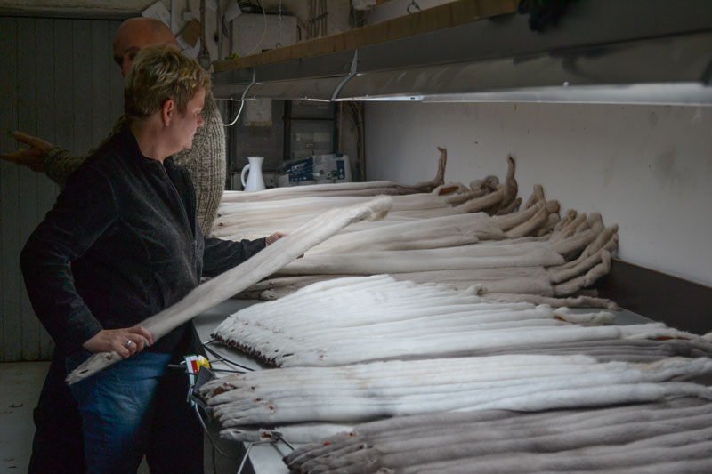 Helle, evaluating pelts