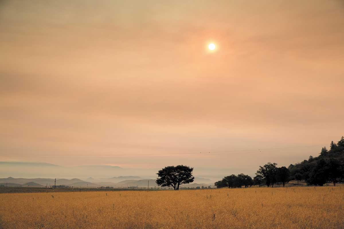 belcampo-rangeland-fire