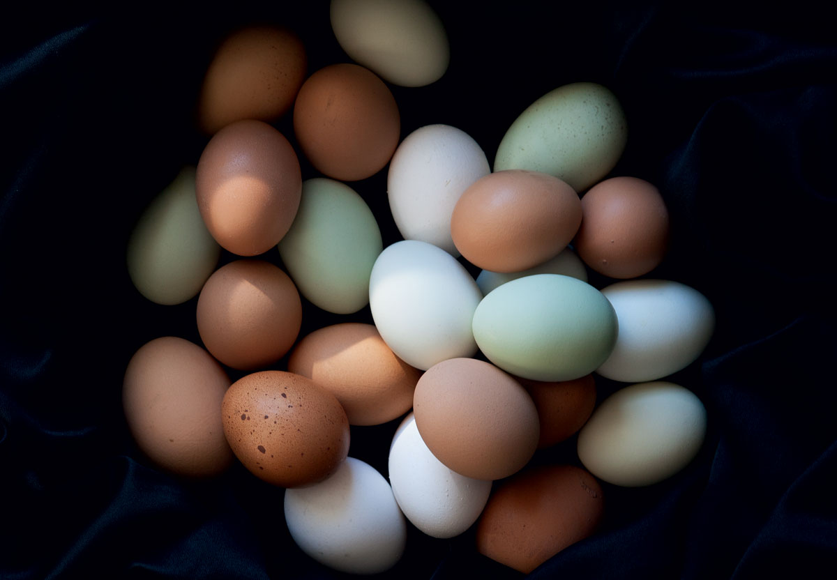 Did you know that unfertilized eggs can be kept unrefrigerated for weeks? (Just don't was off their protective coating.)
