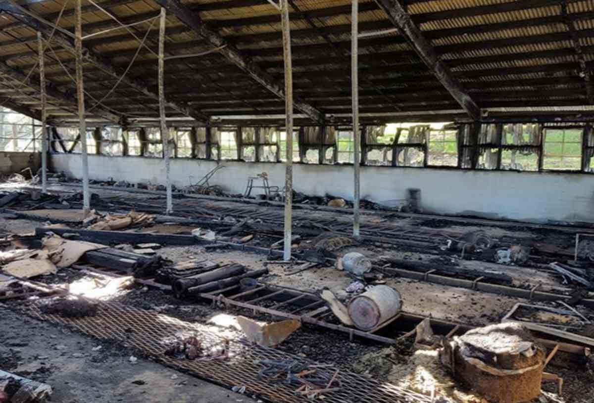 Sad News Fire Destroys Molly Myerson S Little Wing Farm Modern Farmer