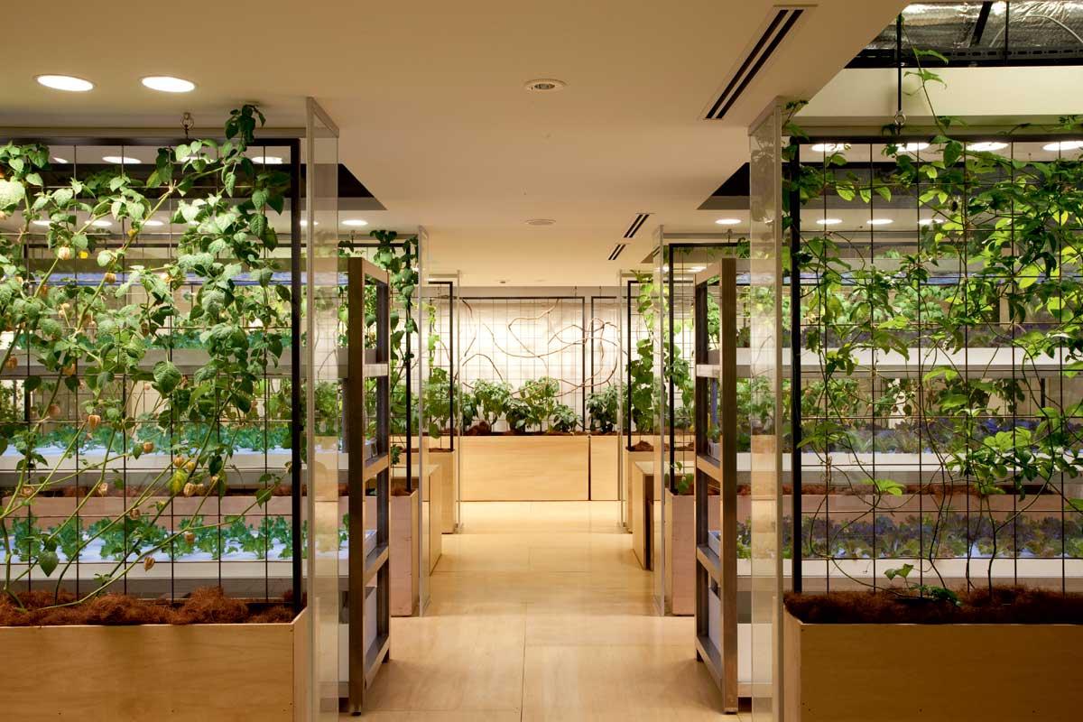 tokyo-glass-chambers