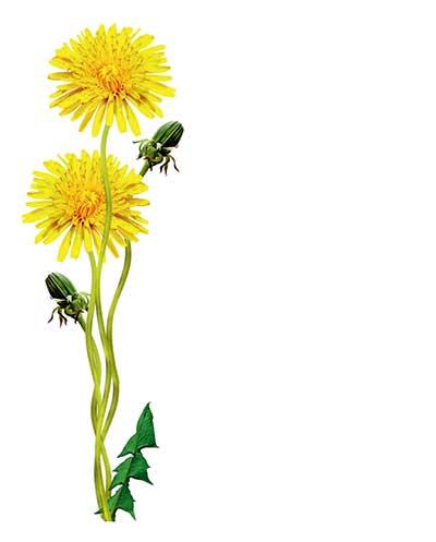 id weeds