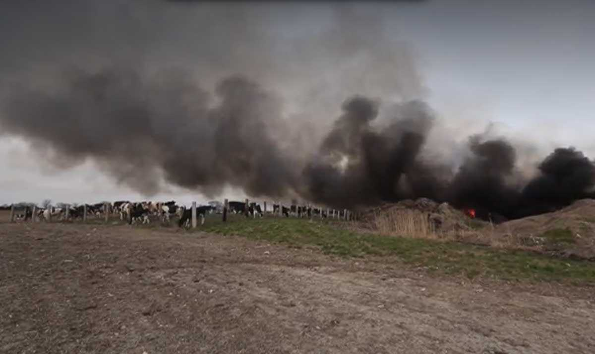 screengrab of jobin farms dairy cow fire