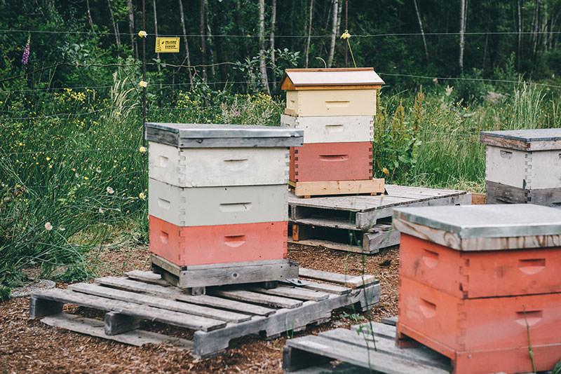 persephone-hives
