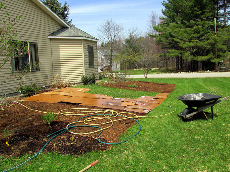Can You Plant Grass Seed In Mulch