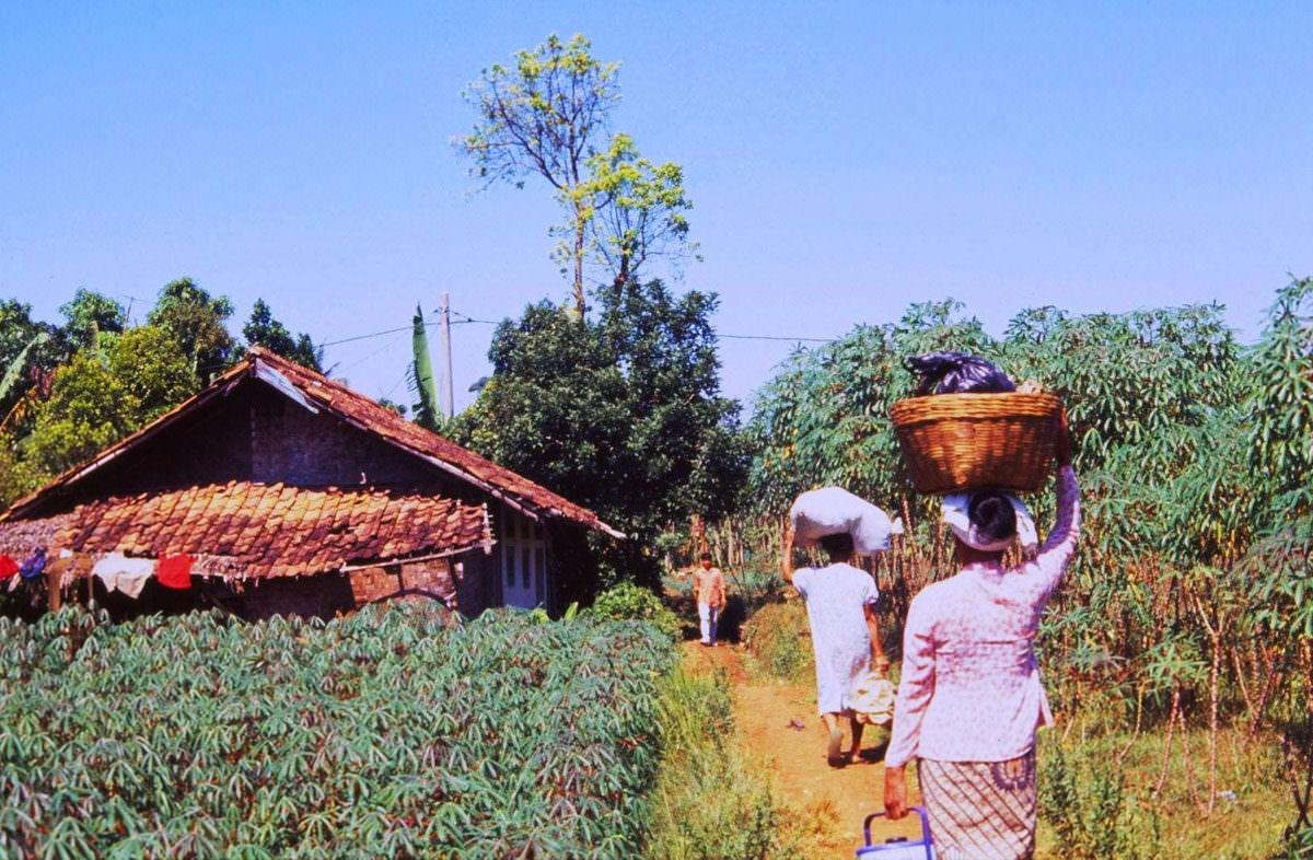 women farming in indonesia