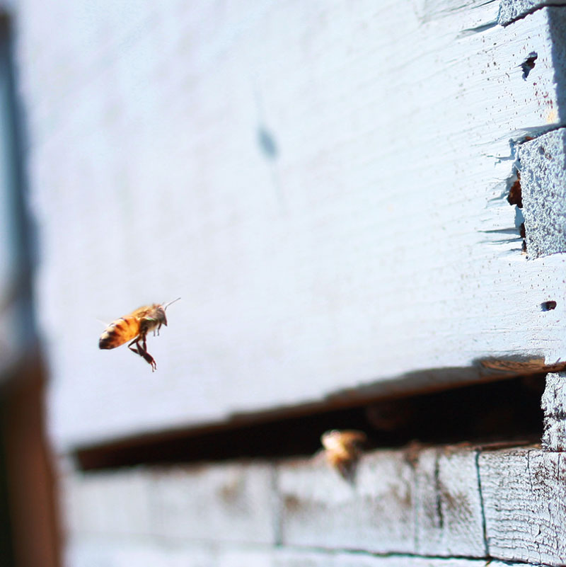 The Top 10 Mistakes Most Newbie Beekeepers Make
