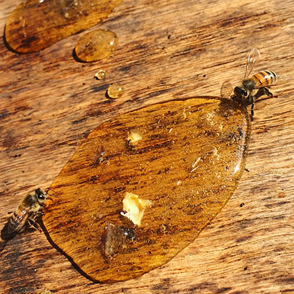 The Top 10 Mistakes Most Newbie Beekeepers Make - Modern Farmer