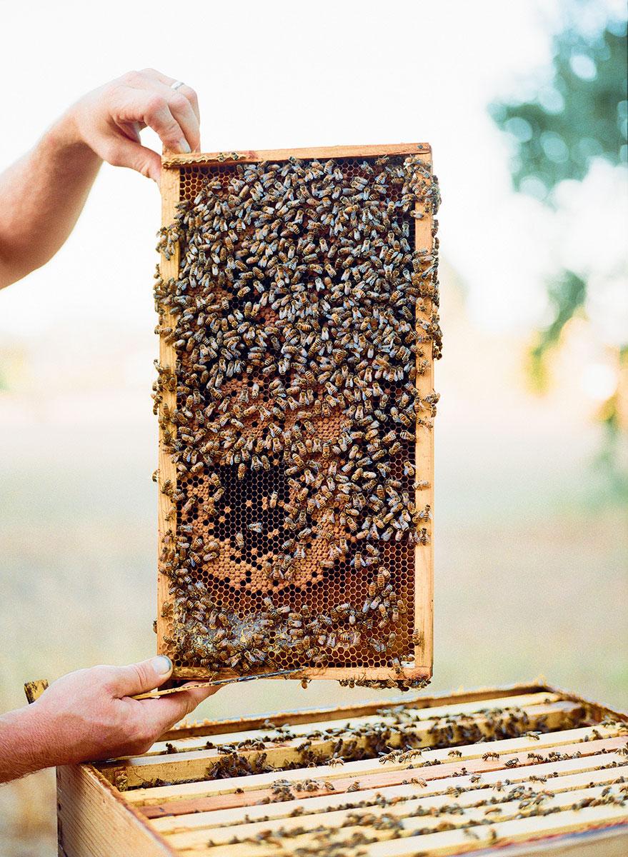 honeybee-frame