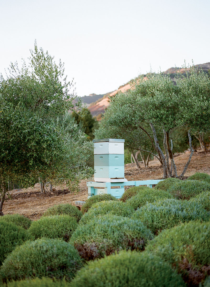 honeybee-hive