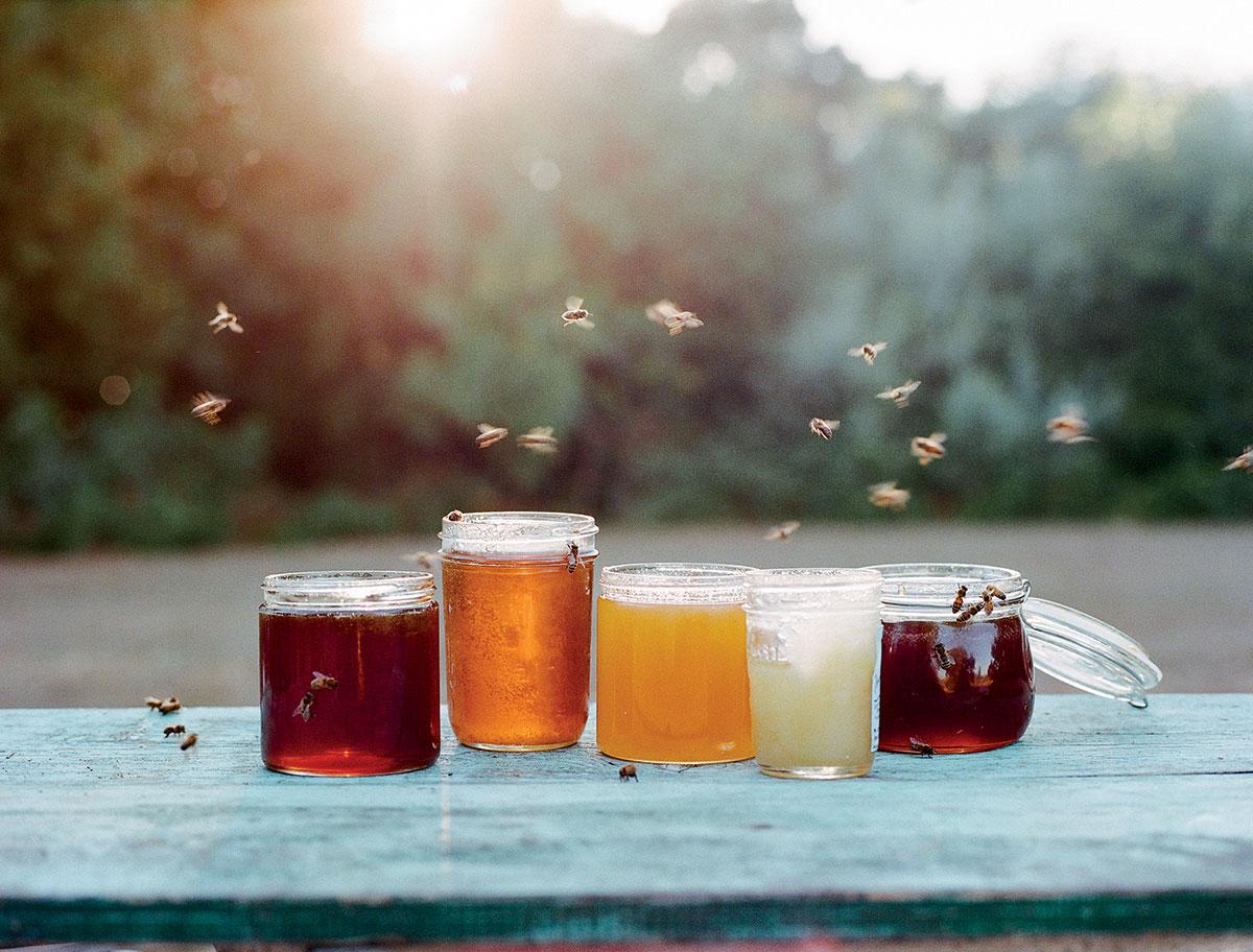 honeybee-honey