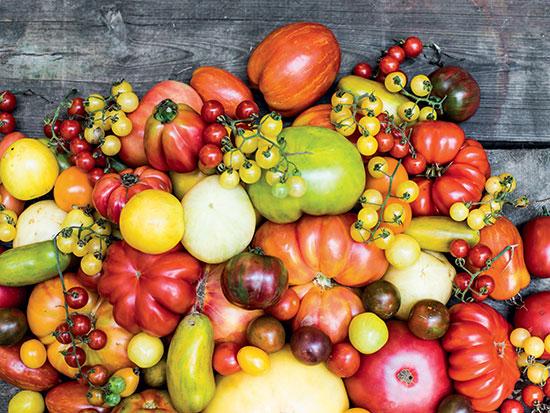 mtmf-mountz-tomatoes