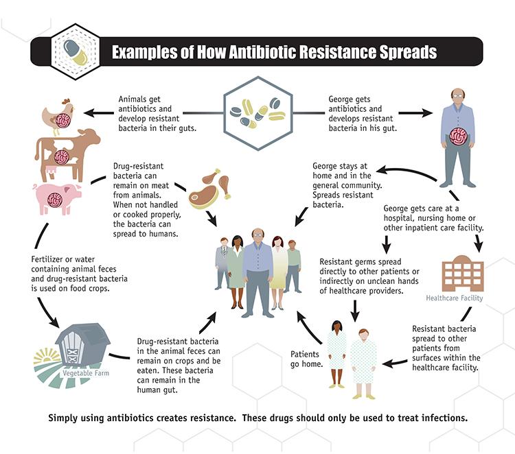 2-how_antibiotic_resistance_spreads