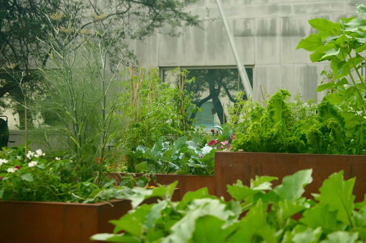 Take A Tour Of The Un S Small Scale And Diverse Food Gardens