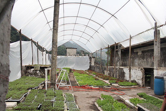 One of Anselmo's two greenhouses (this one full of lettuce) was erected on the ruins of an old quarry building. She renovated an adjacent part of the old structure into office space and a prep room.