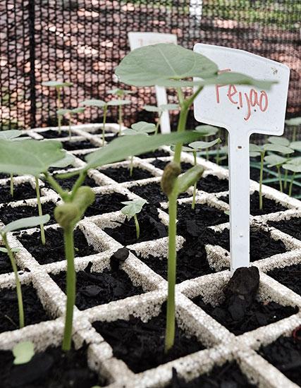 rafa-costa-e-silva-sprouts