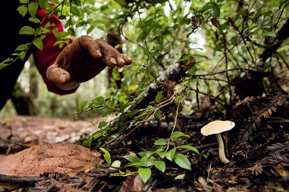mushroom-foraging-hedgehog