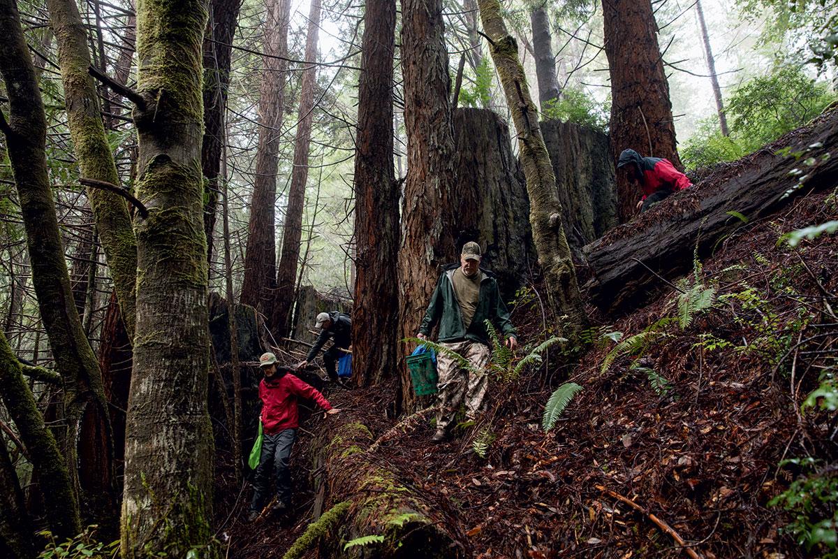 mushroom-foraging-jackson-state-forest