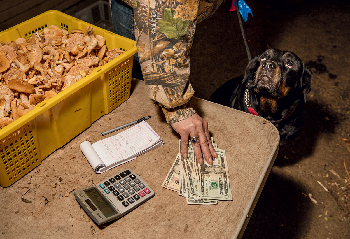 mushroom-foraging-money