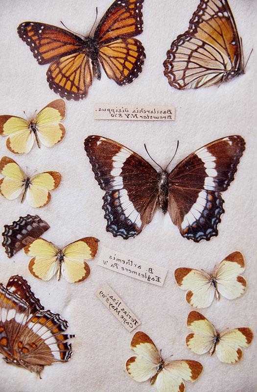 http://modernfarmer.com/wp-content/uploads/2016/09/space-butterflies.jpg
