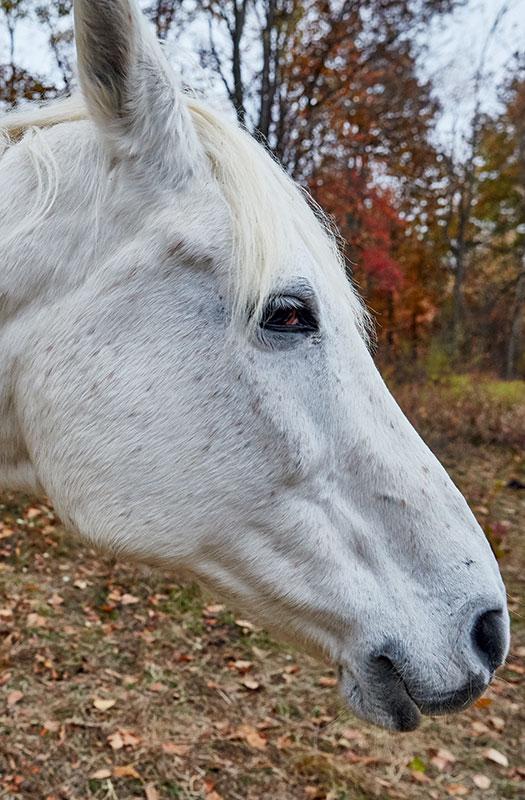 http://modernfarmer.com/wp-content/uploads/2016/09/space-horse.jpg