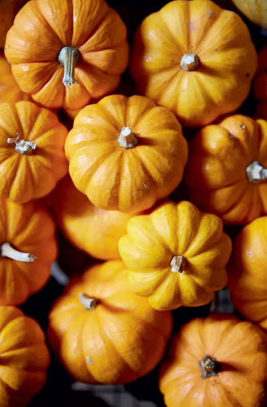 http://modernfarmer.com/wp-content/uploads/2016/09/space-pumpkins.jpg