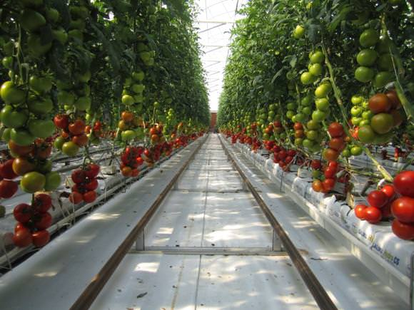 This Farm Uses Only Sun and Seawater to Grow Food - Modern Farmer