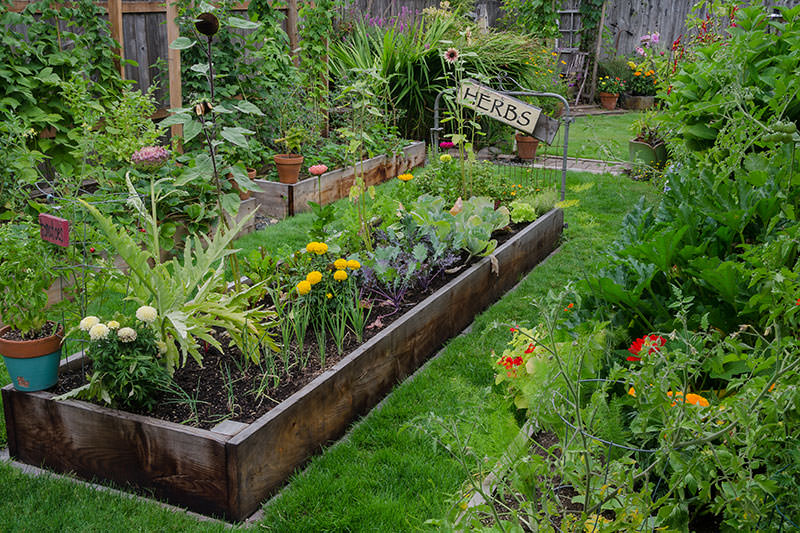 Charmant Are Backyard Gardens A Weapon Against Climate Change?