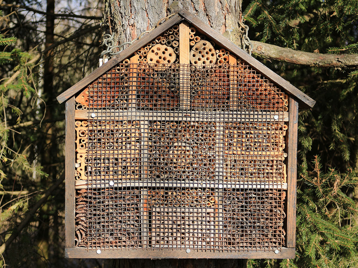 How To Build A Native Bee Hotel