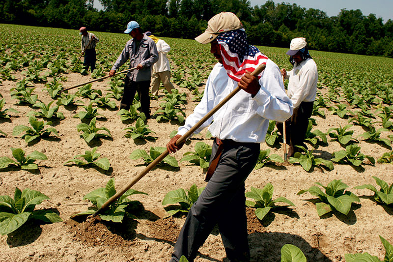 Image result for Reasons to Hire Migrant Farm Workers