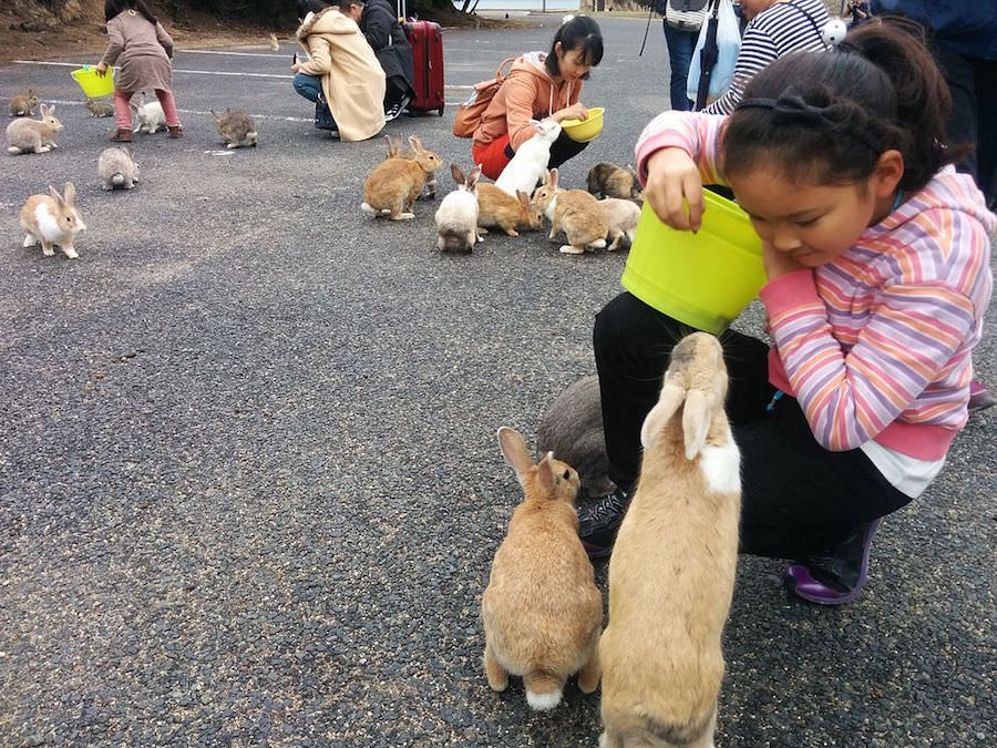 Japan Has An Island Full Of Rabbits But This Small Island Has A Dark History