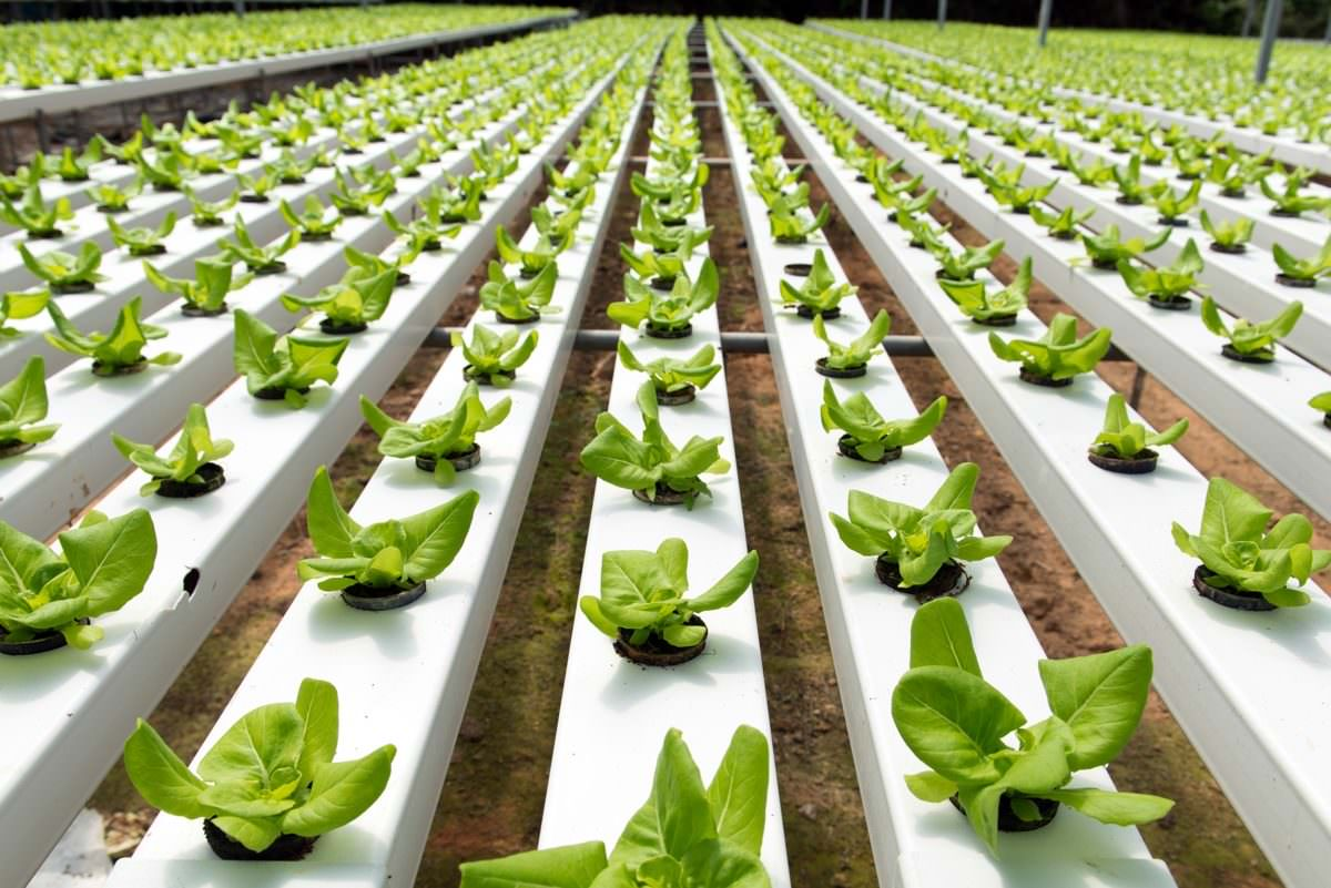 Amazing Agriculture Technology: Hydroponic Farming