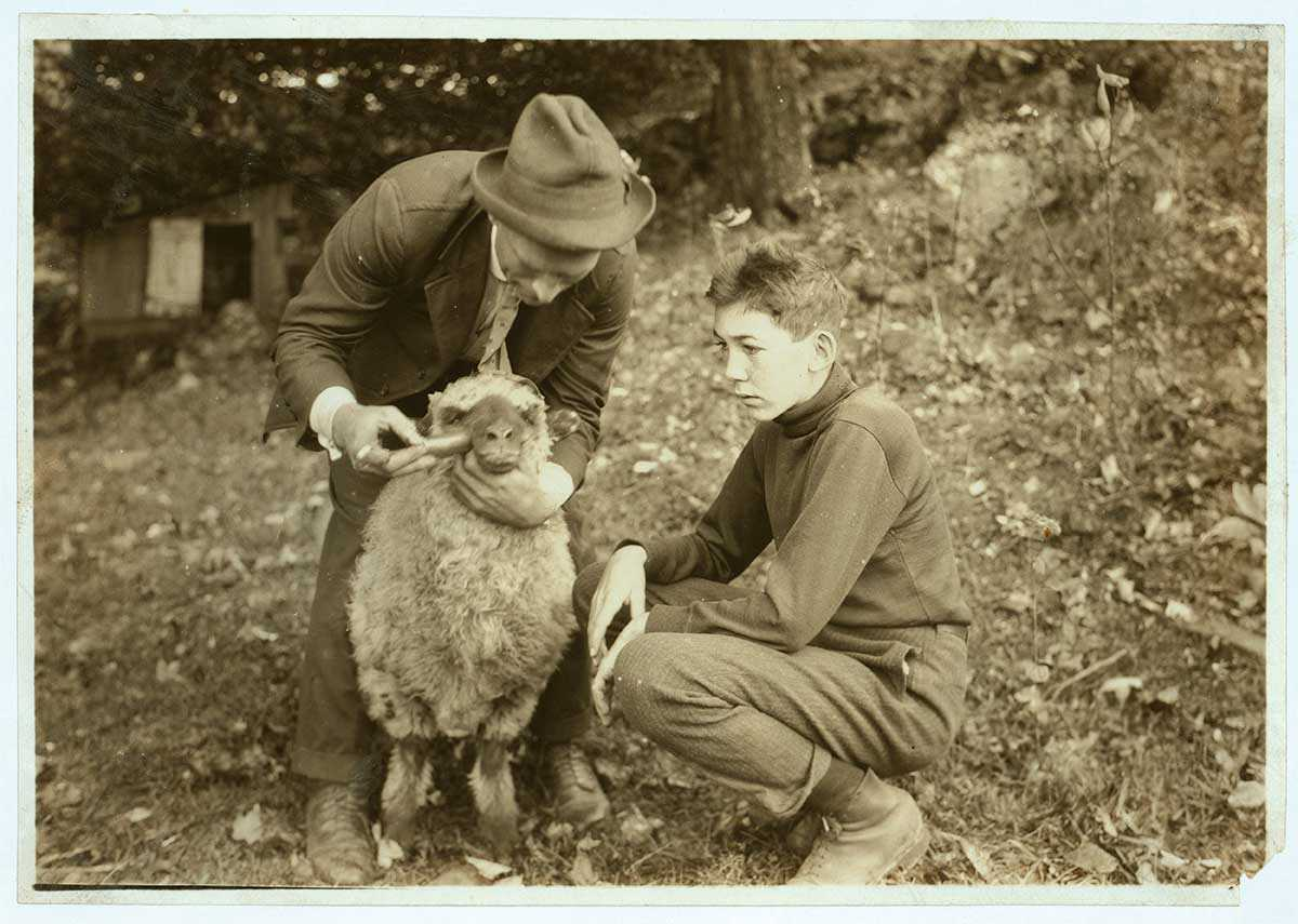1921 Harold Willey (left), an agri- cultural agent, helps 4-H member Forest Kellison treat his sheep for parasites in Virginia's Pocahontas County. A decade or so later, ag agents would prove key to convincing 4-H parents to adopt government- recommended practices.