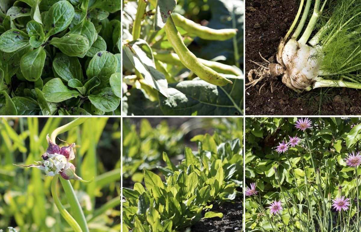 7 Gourmet Vegetables to Plant Now for Fall Harvest - Modern Farmer