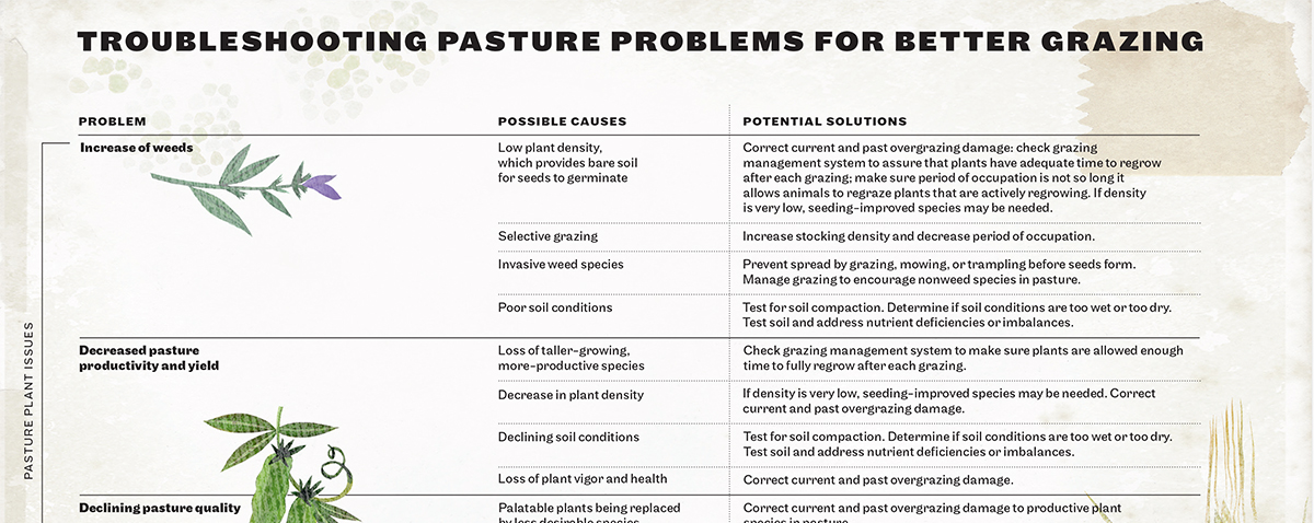 Pasture Guru Sarah Flack Shares How To Grow A Better Greener