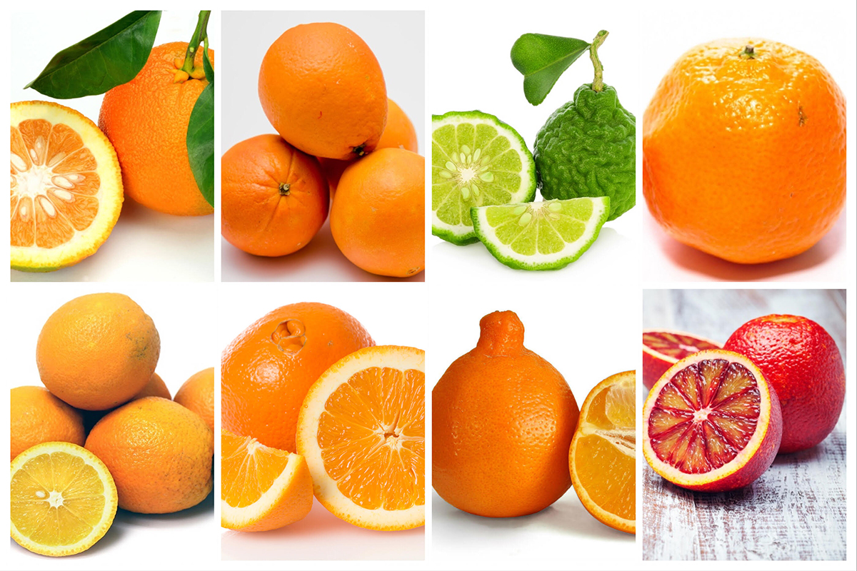 Oranges are one of the best parts of winter. Can you tell the difference between these varieties?